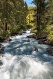 Fast flowing mountain stream Stock Photography