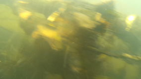 Fast-flowing mountain stream videos under water. Extremely fast current. The person is sinking stock video
