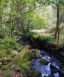 Fast flowing rocky woodland stream with overhanging trees. And mossy rocks Stock Photos