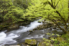 Fast flowing stream in forest. Stock Image