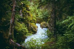 Rushing stream in the rustic mountain wilderness of Alaska. Fast flowing stream and lush foliage in the Alaskan wilderness near Anchorage Royalty Free Stock Photo