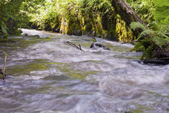 Fast-flowing stream Stock Images