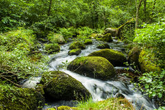 Fast flowing stream in South wales Stock Photo
