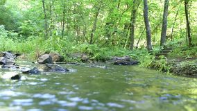 Fast-flowing water in forest stream stock video footage