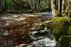 Fast flowing water on river. Fast flowing water river rocks moss forest free tree trees stream streaming nature natural environment royalty free stock images
