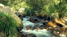 Fast flowing water stream in rocky river in tropical forest in mountain. Close up rapid stream mountain river and. Exotica plants around stock video