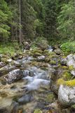 Fast forest mountain river at summer stock image