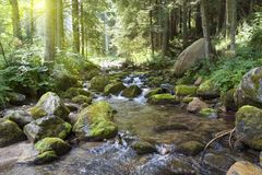 Fast forest mountain river at summer. Tatra Mountains stock image