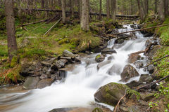 Fast forest river. Flowing among mossy stones royalty free stock photography