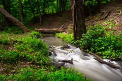 Fast forest river. Small river in wood. Fast water stream in forest Stock Image