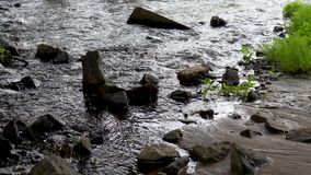 Fast forest stream. water movement green plants.  stock video footage