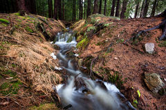 Fast fresh creek in forest Royalty Free Stock Image