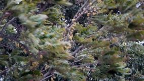 Fast and hard wind blow tree the storm coming. stock video