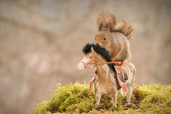Fast horse drive Royalty Free Stock Photo
