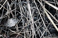 Fast jordning för frysning till blått och frostat gräs royaltyfria foton