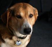 Fast Mensch/Portrait des Hundes Lizenzfreies Stockfoto