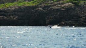 Fast motorboat jumps on waves of Mediterranean Sea, Mallorca Island, Spain stock video
