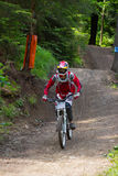 Fast mountain biker in the forest Royalty Free Stock Photo