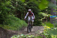 Fast mountain biker racing from ther hill Royalty Free Stock Images
