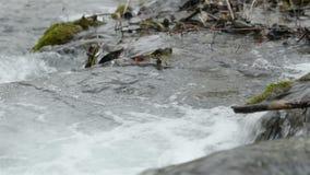 Fast mountain creek flowing stock video footage