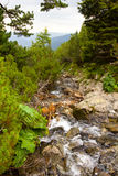 Fast mountain river Stock Image