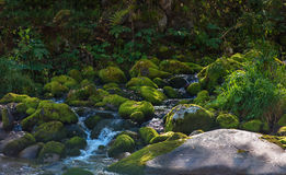 Fast mountain river in Altay Royalty Free Stock Photography