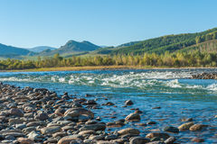 Fast mountain river in Altay Royalty Free Stock Photos
