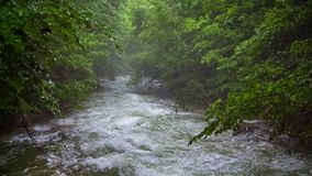 Fast Mountain River Flowing Downhill Among. This is a video shot in picturesque place - mountain river stream flowing fast downhill amidst lush green trees and stock video footage