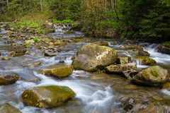 Fast mountain river , spring in Carpathians, Ukraine stock photos