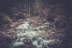 Fast mountain river Stock Images