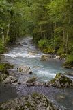 Fast mountain river and green forest stock image