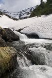 Fast mountain river in romanian carpathians. In spring snow melting Royalty Free Stock Image