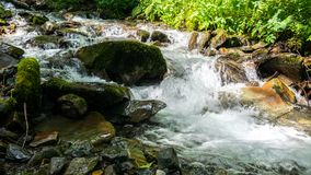 A fast mountain stream with rocks, surrounded by greenery royalty free stock image