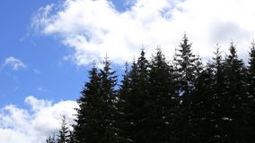 Trees with clouds moving in the background. Fast moving clouds behind the trees stock video footage