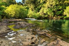 New Zealand scenery: a river running through native forest, past rock pools stock photography