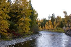 A fast moving river bends around beautiful autumn trees. royalty free stock photos