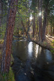 Fast Moving Stream Hat Creek Lassen National Forest Royalty Free Stock Image
