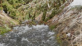 Fast moving waterfall creating huge foam on river. Panoramic shooting and ambient sound. Original ambient sound. Snowy branch of young Christmas tree sway from stock footage