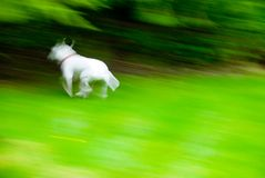Fast Puppy Royalty Free Stock Images