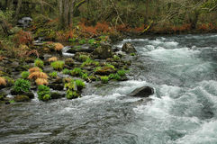 Fast River. A fast river on a natural reserve Stock Photos