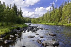 Fast river. The mountain river and forest Royalty Free Stock Photography