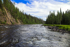 Fast river. The mountain river and forest Stock Photography