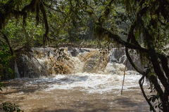 Free Fast River In Kakamega Forest. Kenya. Royalty Free Stock Photos - 83041978
