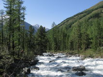 Fast river. Russian Siberia coniferous forest untouched nature wild flowing stream summer Stock Image