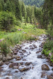 Fast river trough the forest Royalty Free Stock Images