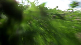 Fast run through the grass. stock footage