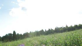 Fast run through the grass. Stock Photography