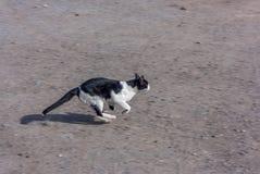 Fast running cat Stock Image