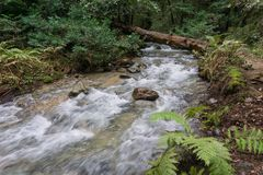 Fast running creek, Henry Cowell State Park, Felton, California stock photos