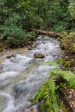Fast running creek, Henry Cowell State Park, Felton, California stock photo